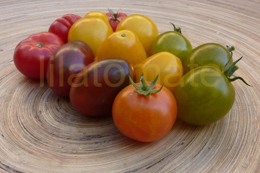 Tomate Sortenmischung 'Cocktailtomaten' Saatgut