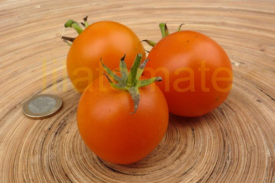 Tomate 'Orange Favourite' Saatgut