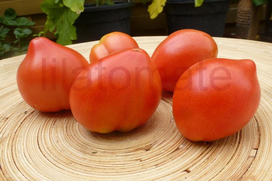 Tomate 'Kleine Herztomate' Saatgut