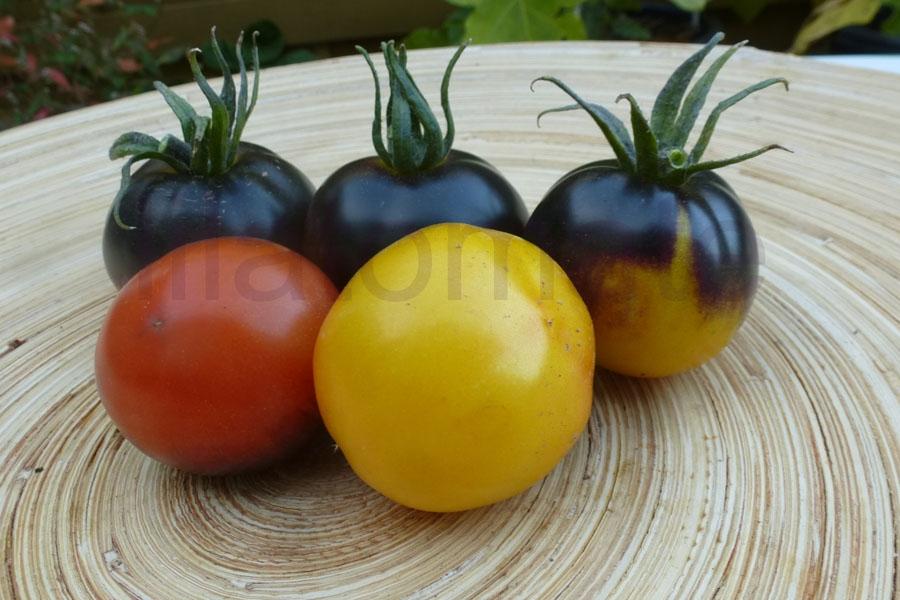 Tomate 'Elberta Leeway, blau' AT Saatgut