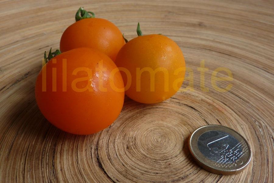 Tomate 'Pendulina' Saatgut