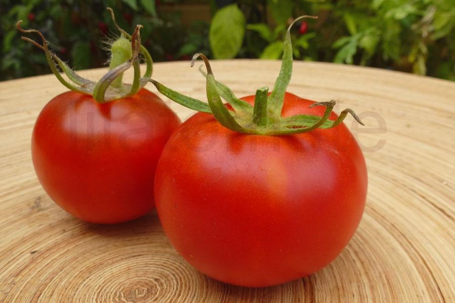 Tomate 'Elfriede, niedrige Pflanze 2018 AT' (Arbeitstitel)