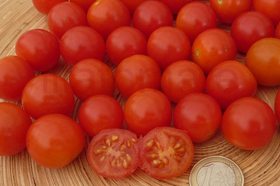 Tomate 'Amore' (Arbeitstitel) Saatgut